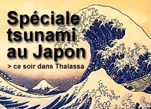 Tsunami-Thalassa-mars11
